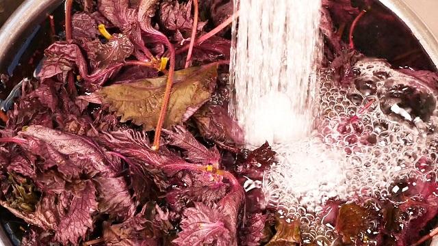 紫蘇ジュースの作り方